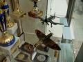 drony12